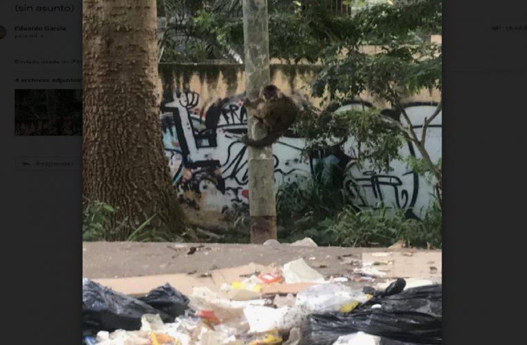 Starving Venezuelan zoo animals let onto street to scavange in Socialist Utopia